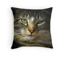 Coppery Cat Throw Pillow