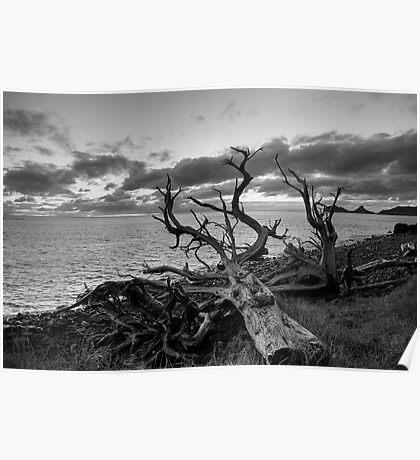 Dead Tree Lord Howe Island Poster