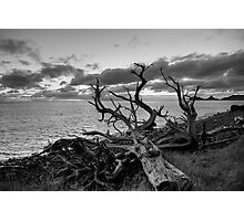 Dead Tree Lord Howe Island Photographic Print