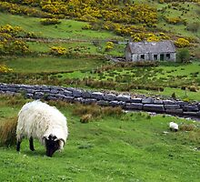 Stone Cottage Gorse and Sheep by Lyle McNamara