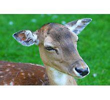 Deer........... Photographic Print