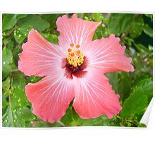 Caribbean Hibiscus Poster