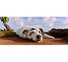 Let sleeping dogs lie Photographic Print