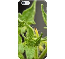 Tomato Plant Leaves Macro (4) iPhone Case/Skin