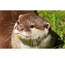 Otter Portrait Photographic Print