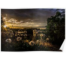 sunset garden Poster