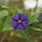 Purple Flower by Ajmdc