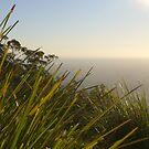Mount Dandenong by Ajmdc