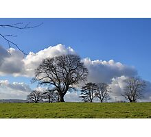 Cloud Blossom on Winter Trees.............Somerset UK Photographic Print