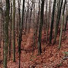 Rainy Red Hiking Trail by Kathryn Short
