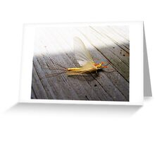 Mayfly in June Greeting Card