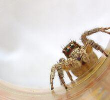 Bug Love by T. Thornton