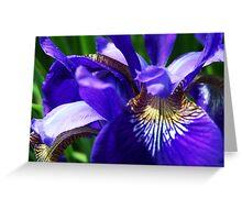 Nature's Design Greeting Card