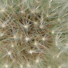 Puff Of White by Darlene Ruhs