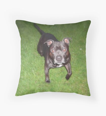 Handsome Staffordshire bull-terrier Throw Pillow
