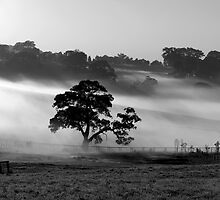 Morning Mist by Leeo