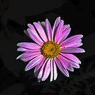 Pretty in Pink by Moninne Hardie