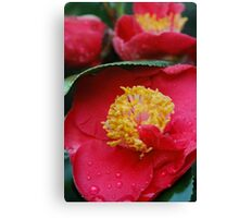 "camellia ""Dr. King"" Canvas Print"