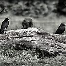 7 Crows by Terence J Sullivan