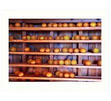 Orange Harvest Art Print