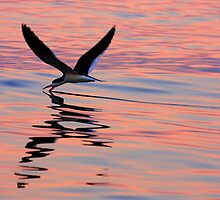 Sunset Skimmer by LAmBChOp