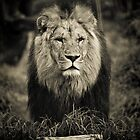 The KING by Corey  Brown