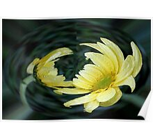 Yellow Daisy in a Bubble  Poster