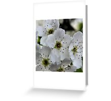 Spring in Suburbia Greeting Card