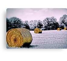 Field of Bales Canvas Print