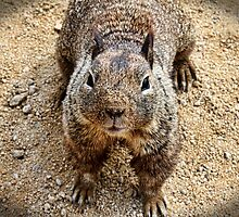 Do You Have Any Peanuts by Judy Vincent