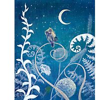 Little Amethyst Owl. Photographic Print