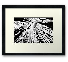 The Gathering - Winter Trees Framed Print