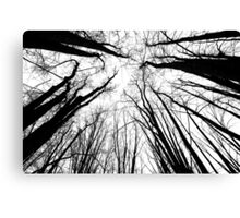 The Gathering - Winter Trees Canvas Print