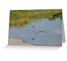 Flood bird Greeting Card