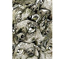 Battle Dogs Photographic Print