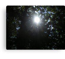 Piercing sunlight Canvas Print