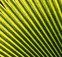 Leaf by Juha Sompinmäki