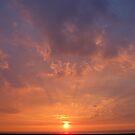 Sunbeam .. by PinkLady