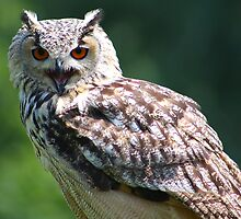 Eurasian Eagle-owl by jdmphotography