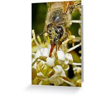 A Sip of Nectar Greeting Card