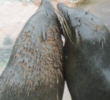 Seal Love: In the Same Direction Sticker