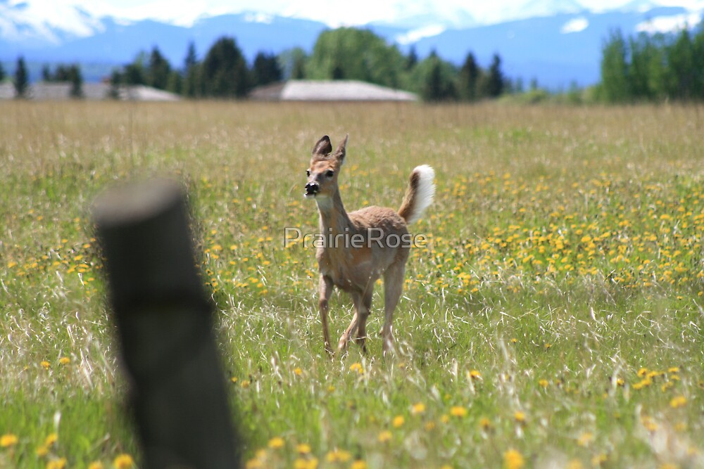 Here Comes Bambi by PrairieRose