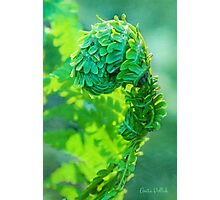 I Am Fern Man! Photographic Print