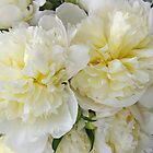 White Peonies by Tom  Reynen