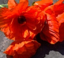 Poppy Bouquet - 2036 views as of 1/27/15 by Fay270