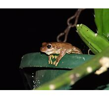 BrownFroggy-TeaTime Photographic Print