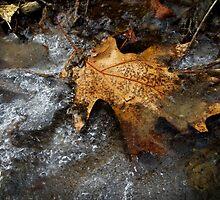 Winter Trail by SRowe Art