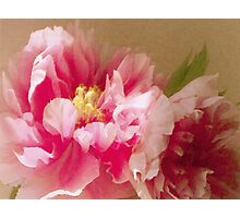 Raspberry Damask - 1373 views as of 1/10/15 Photographic Print