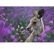 Roo in flowers. Photographic Print