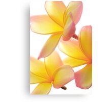 Yellow Frangipani Canvas Print